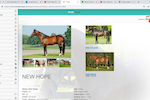 Breeders App screenshot: Breeders APP horse profiles