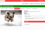 Gingr screenshot: Create profiles for dogs including the most important information for the business